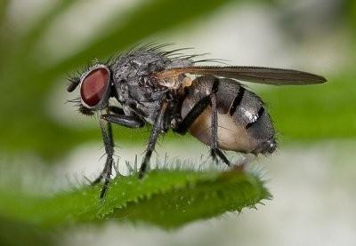 Կենդանի էակի արտաքին տեսքի ձևավորման վրա ազդում են ոչ միայն գեները, այլև միջավայրը