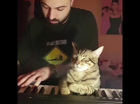 Օրորոցային՝ կատվի համար (տեսանյութ)